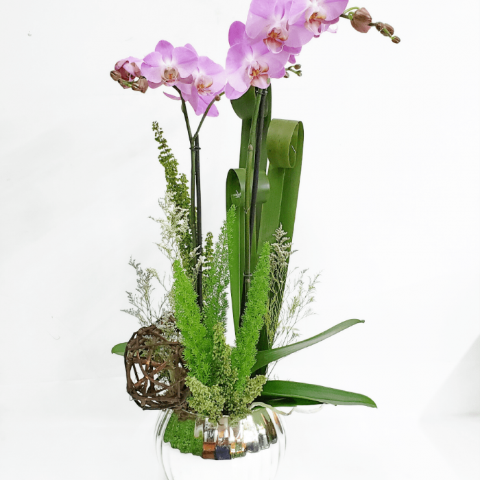 Maceta con orquídea phalaenopsis
