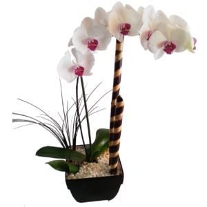 Arreglo de orquídeas blancas con rosa