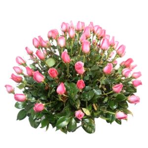 Arreglo de rosas naturales 56 piezas