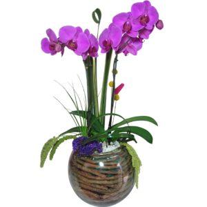 Arreglo de orquídeas en pecera de cristal