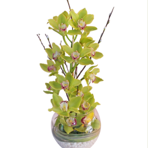 Arreglo de orquídeas verdes