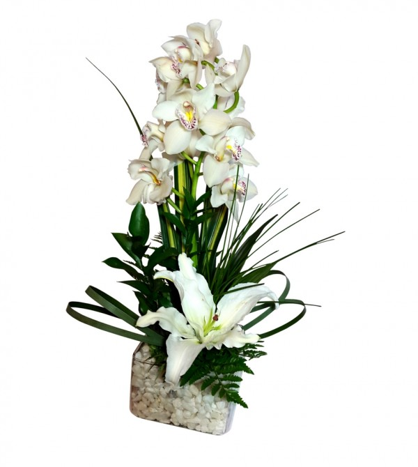 Orquídeas blancas cymbidium