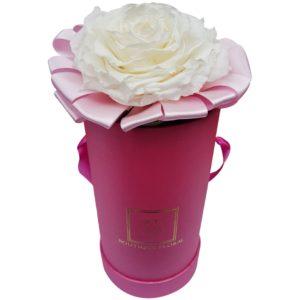 Caja de rosa blanca 1 pieza